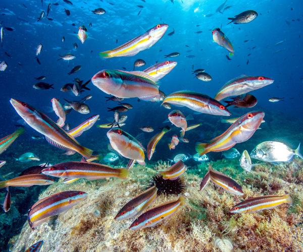 Réserve-Bonifacio-nature-Corsica.jpg