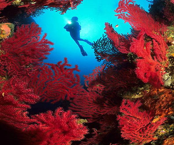 Réserve-Bonifacio-plongée-nature-Corse.jpg
