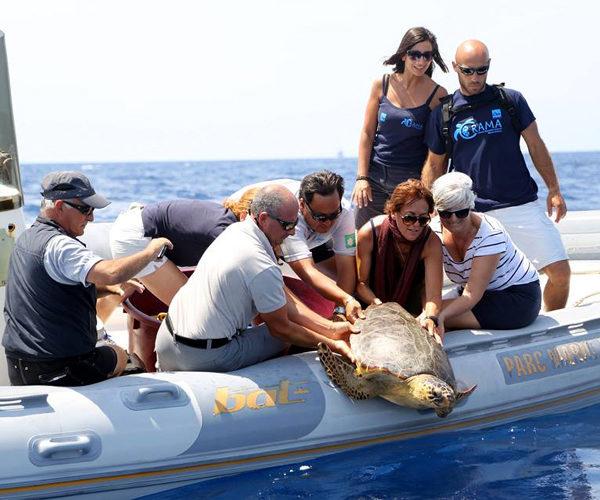 Réserve-Bonifacio-protection-espèce-nature-Corse.jpg