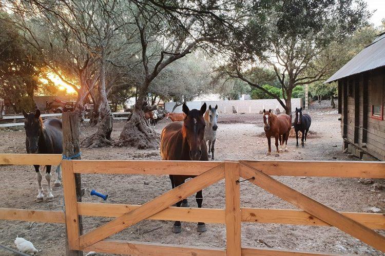 Ranch-de-sandiego-balade-Bonifacio-chaval-Corsica.jpg